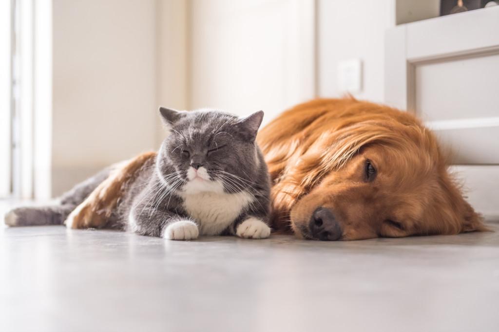 Sdílíte domácnost se zvířecími mazlíčky - Creative Commons (shutterstock.com)