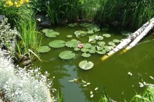 garden-248445_1280